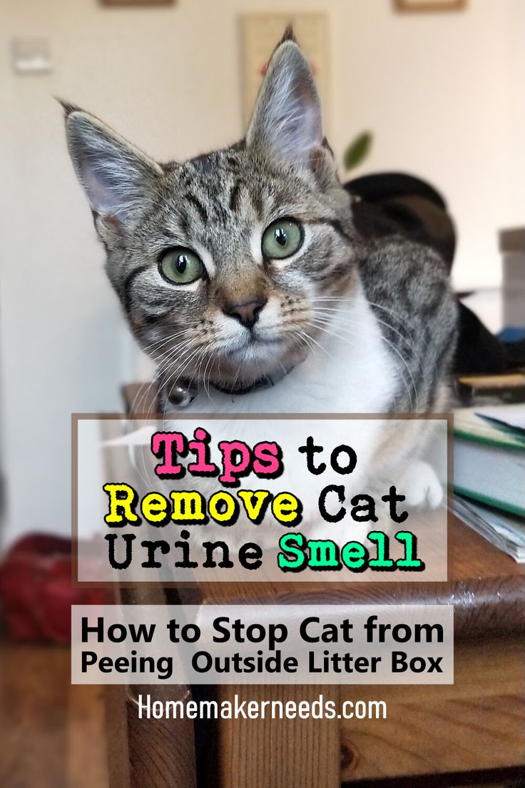 Tips To Remove Cat Urine Smell In 2020