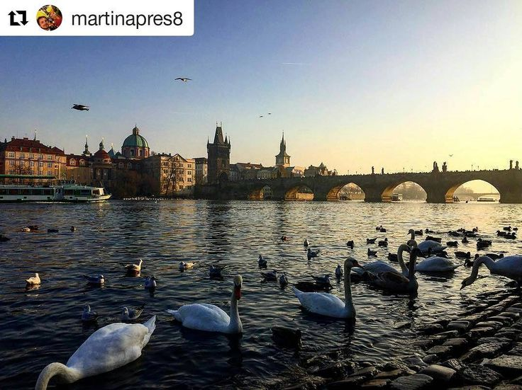 #Repost @martinapres8 with Charles bridge view  Starting the 2017 in this wonderful place  the city of my Erasmus and the one that has stolen my heart #love #praha #erasmus #neverends #fun #besttime #oldtimes #newyear #2017 #beginning #backhere #czechrepublic #discover #travel #italiangirls #traveler #guide #nature #karluvmost #charlesbridge #carlo #colpodifulmine #resolutions #myerasmus