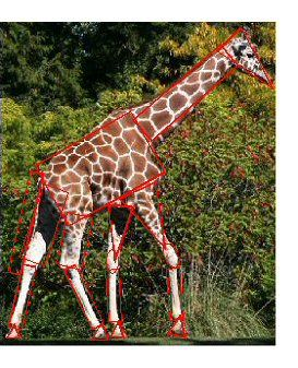How to Draw a Giraffe Stage 1