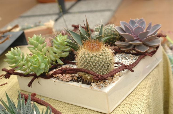 Una composizione di cactus e succulente #crassulacee #piantegrasse #piante #succulent #cactus