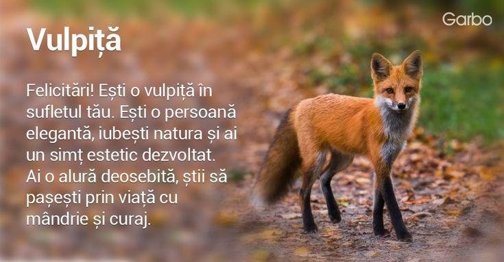 Daca ai fi un animal, ce animal crezi ca ai fi si ce spune aceasta despre personalitatea ta?