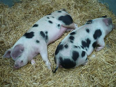 Spots! Like we have for 4H