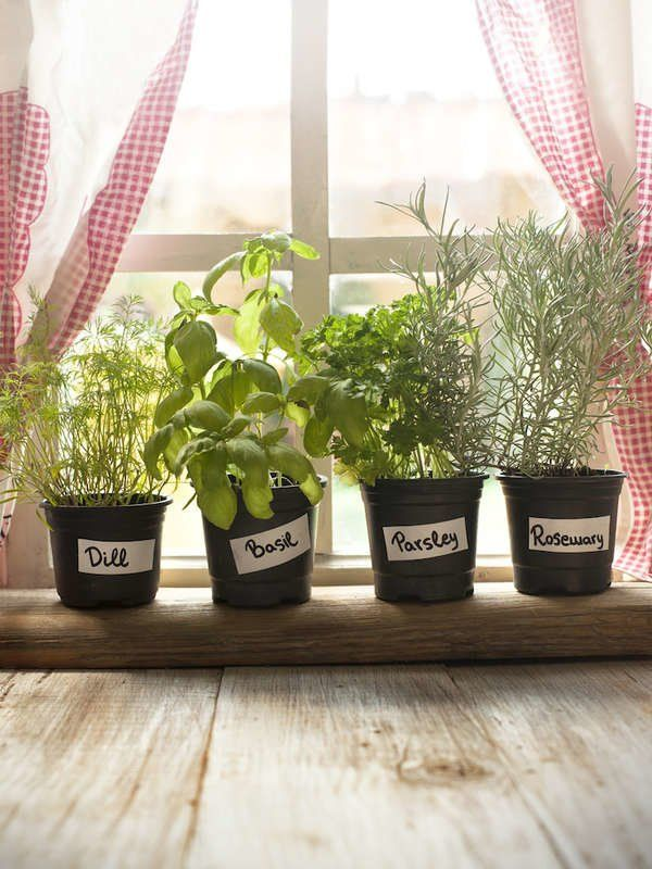 Herbs Best Houseplants For The Kitchen