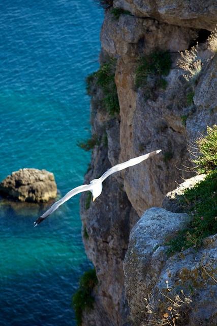 Gabbiano - prove di volo, via Flickr.