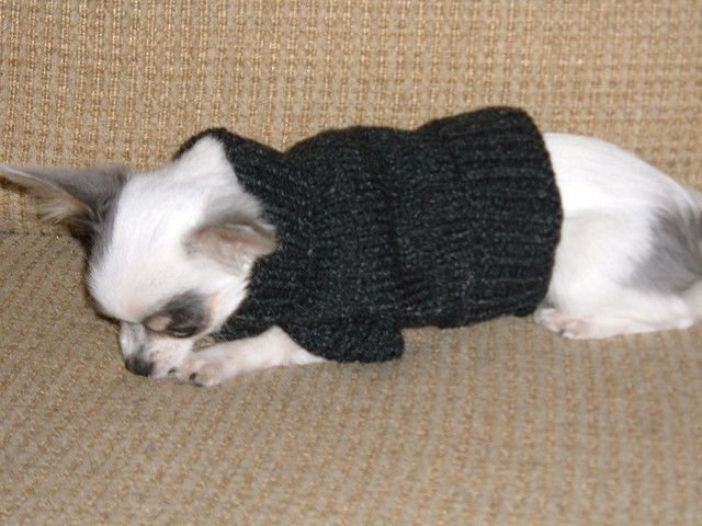 Knitting Pattern Easy Dog Sweater : 196 best vetements pour chiens images on Pinterest