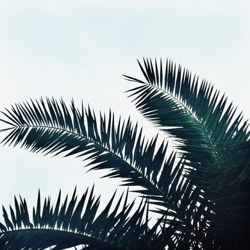 palms ✖️GREEN // Muse by Maike //  Instagram: @musebymaike  #MUSEBYMAIKE