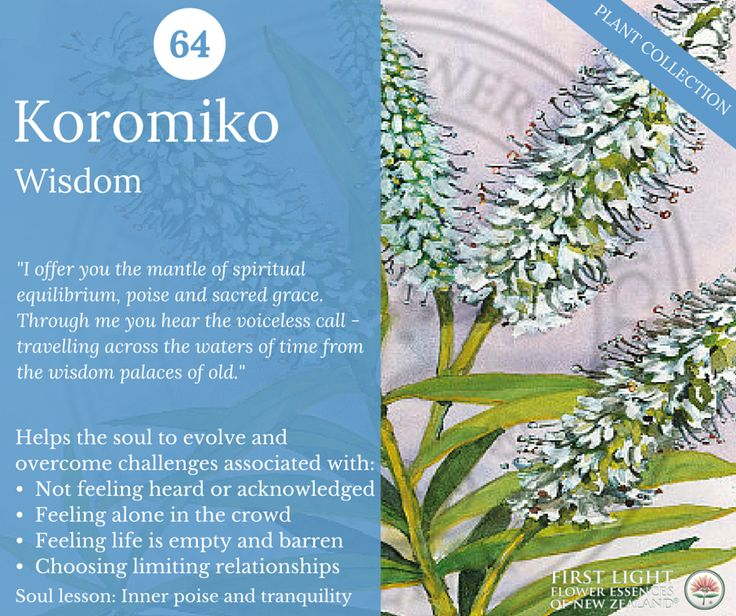 Koromiko - Wisdom - corresponds to the archetype of the wise woman – the priestess, healer, psychic. Provides access to the eternal divine feminine, especially when working in a healing capacity. Use for protection from emotional tension emitted by others or environment, for a sense of calmness and objectivity, or to avoid being drawn into life dramas, for emotional self-sufficiency. 