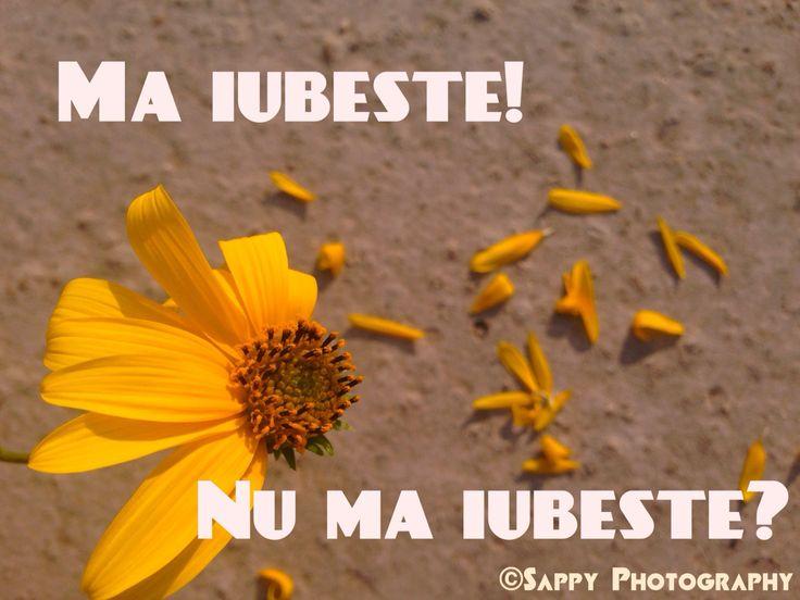 He loves me! He loves me not? #yellow #flower