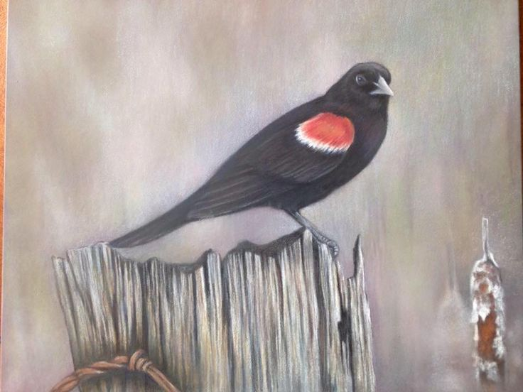 Redone Redwing Blackbird  CP with pastel on ampersand board