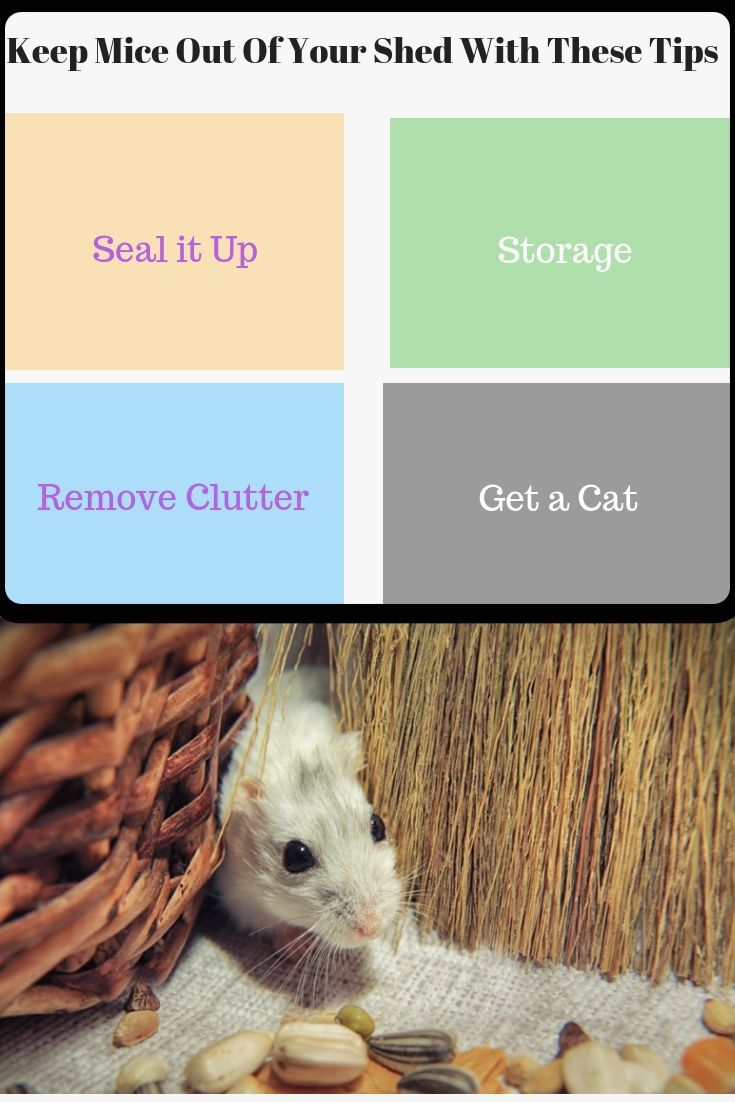 Keep Mice Out Of Your Shed With These Tips Shed Mouse Problem Garden Shed