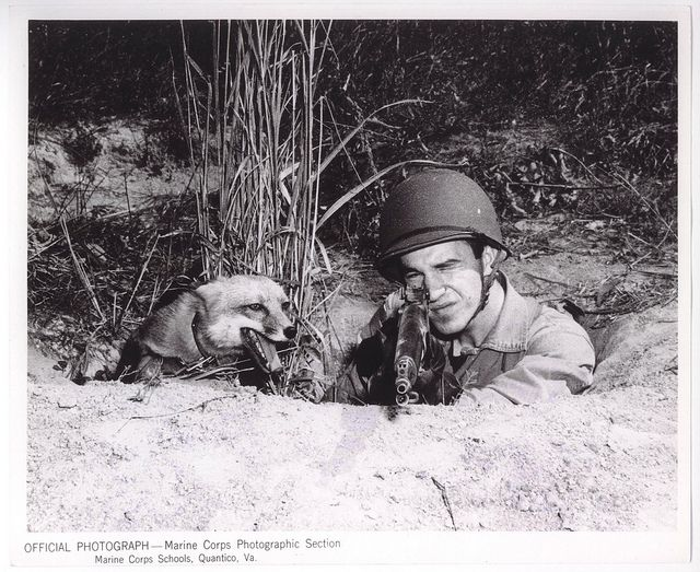 """Fox-Hole Buddies, 14 October 1943 by Marine Corps Archives & Special Collections, via Flickr. """"'A Marine can share my fox-hole any day', says Rusty the Red Fox. Private Harry W. Weber, 19, son of Mr. and Mrs. H.B. Weber of Skowhegan, ME does just that as he aims his rifle in the field at the Quantico, VA, Marine Base. Rusty is Private Weber's pet.""""    From the Photograph Collection (COLL/3948), Marine Corps Archives & Special Collections"""
