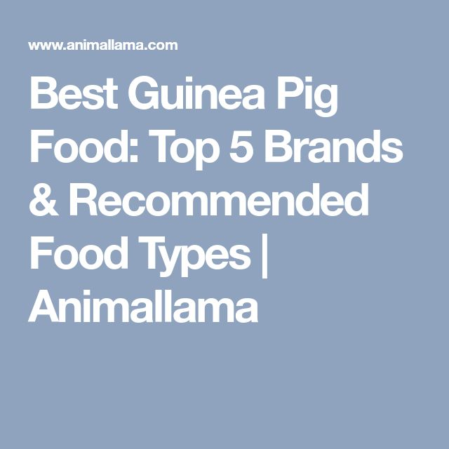 Best Guinea Pig Food: Top 5 Brands & Recommended Food Types | Animallama