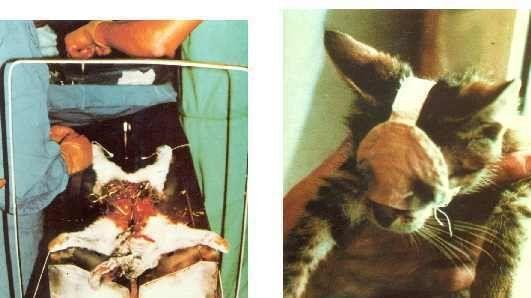 Jurlique Pure Skin Care; Stop selling products tested on animals. Petition · Jurlique Pure Skin Care One Bridge St., Ste. 42 Irvington, New York 10533 212-803-8121 www.jurlique.: QUE LA SOCIÉTÉ Jurlique Pure Skin Care STOP LA VENTE DE PRODUITS ISSU DE L'EXPÉRIMENTATION ANIMAL · Change.org