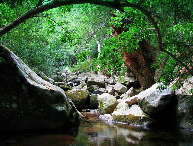 Newlands forest - Cape Town.  Best trail running
