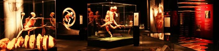 Body Worlds: il vero mondo del corpo umano (Roma_fino al 12/02/2012)