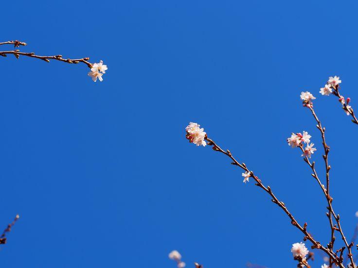 spring and blue sky