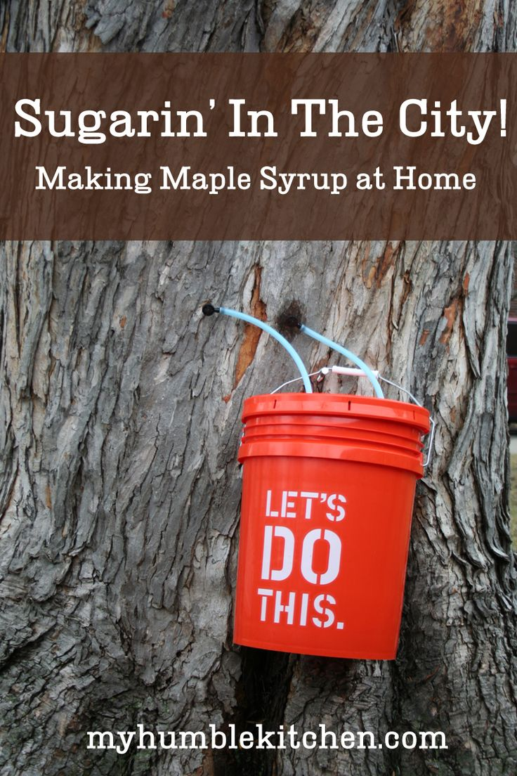 81 best maple syrup and such images on pinterest maple sugar