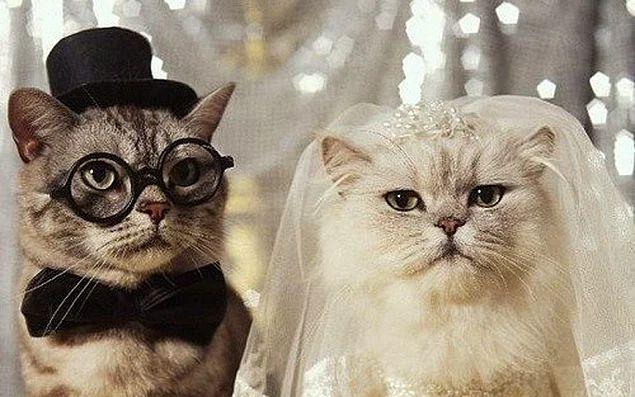 Aşktan çok mantık evliliği gibi.