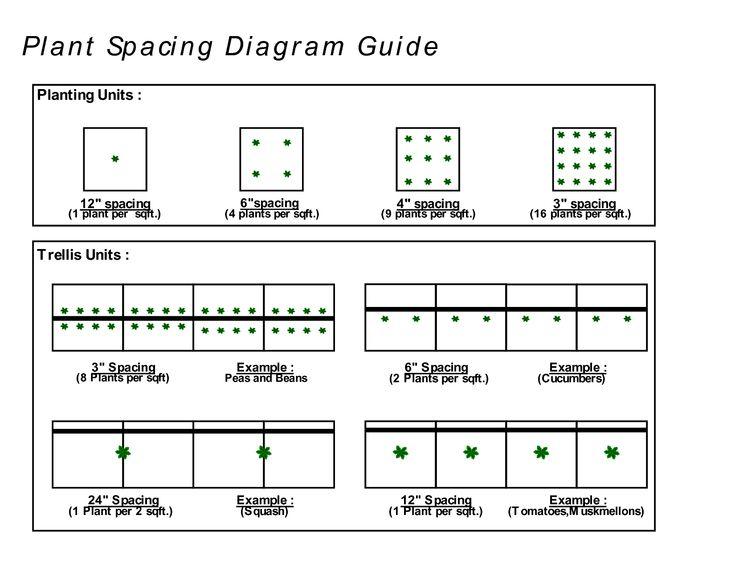 Vertical string trellis google search gardening fruits vegetables herbs pinterest - Spacing planting vegetables guide ...