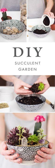 Um mini jardim de suculentas para quem mora em apartamento e não quer ter tanto trabalho com as plantas. Pode até colocar cristais na terra para as boas energias fluirem!