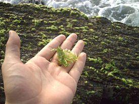 Las algas son un grupo muy diverso. Estos organismos acuáticos van desde seres microscópicos unicelulares hasta organismos multicelulares.