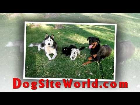 Excellent opportunity to save fantastic cash on your dog food at the DogSiteWorld Store.  Buying dog products at discounted prices is only possible at online pet stores as online pet supplies stores is devoid of all physical building expenses such as local authority rates, no utility bills and no expenses concerning the employment of staff - except for customer support etc, so the lower costs associated with online pet supplies stores is passed directly to the pet supplies customer. Visit…