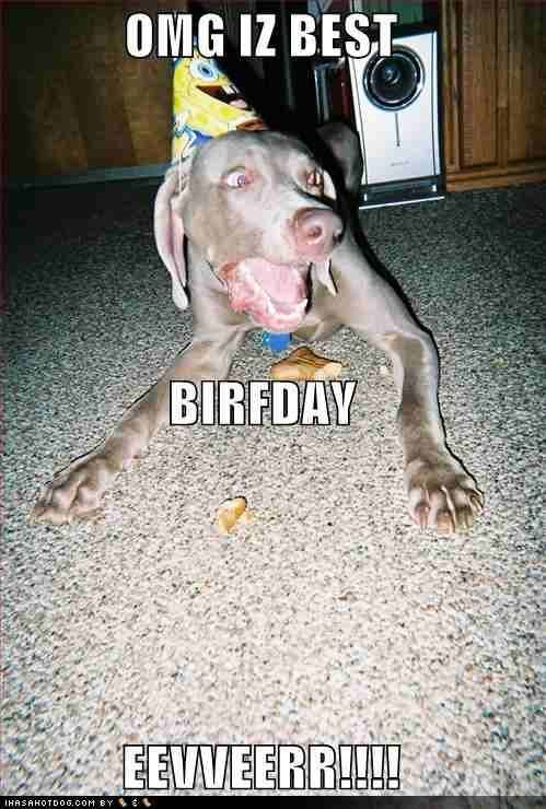 funny birthday pictures   Funny Birthday Images   It's My Birthday!