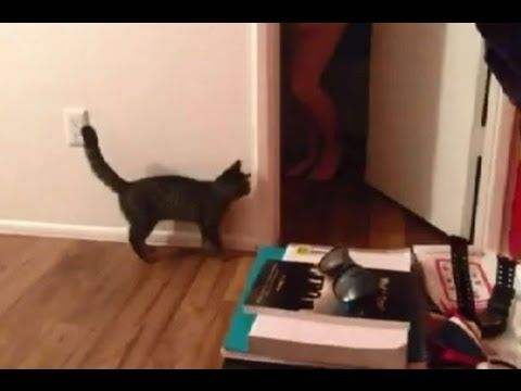 Scared Cat ! FUNNY - YouTube