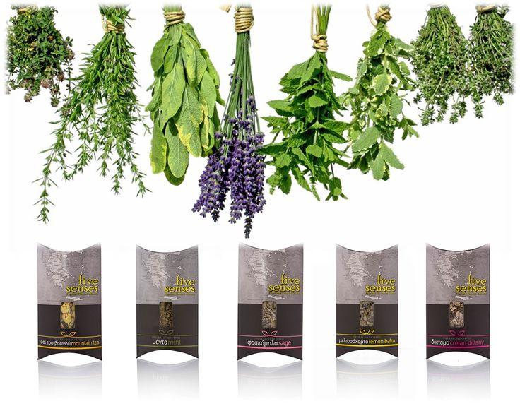 enjoy greek herbs with your 5 senses