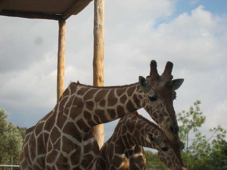 Paphos Bird and Animal Park. You can feed the giraffes. The kids love it...me too!