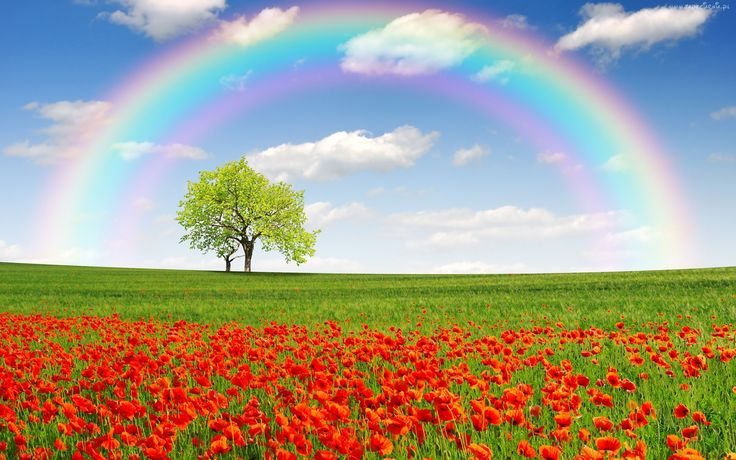 Łąka, Maki, Drzewo, Tęcza, Wiosna