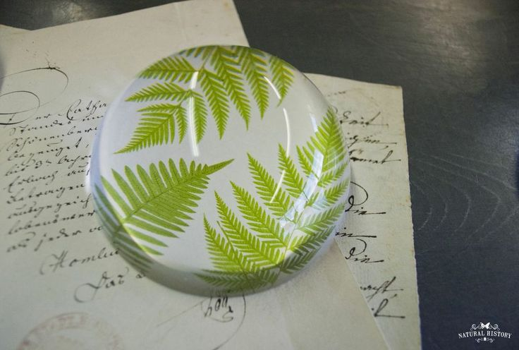 Fern Paperweight by Natural History