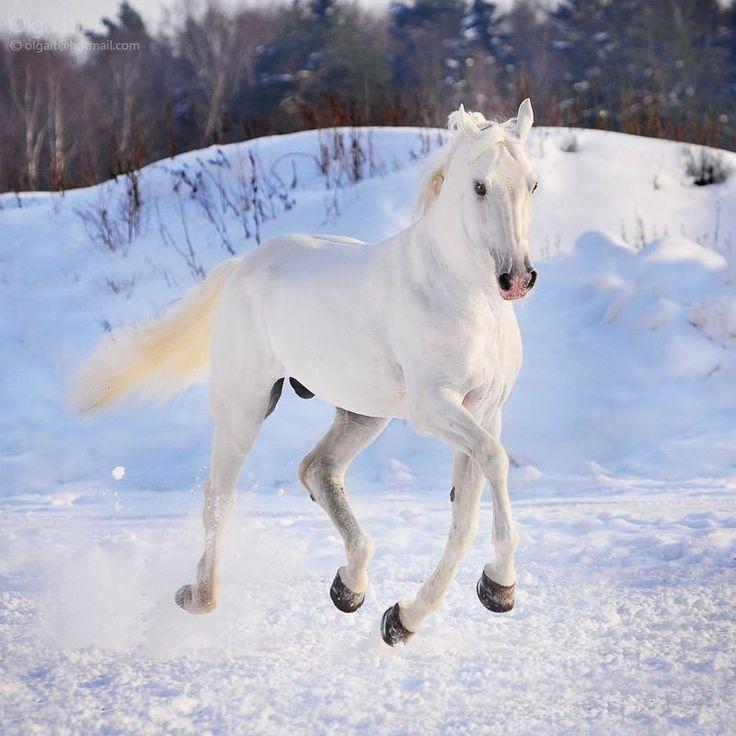 ló a télben