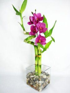 Live Spiral 3 Style Lucky #Bamboo Plant Arrangement w/ silk Orchid & Glass Vase & Stone  $11.99 | #luckybamboo