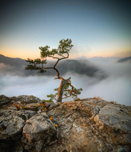 500 years old © Marcin Kesek