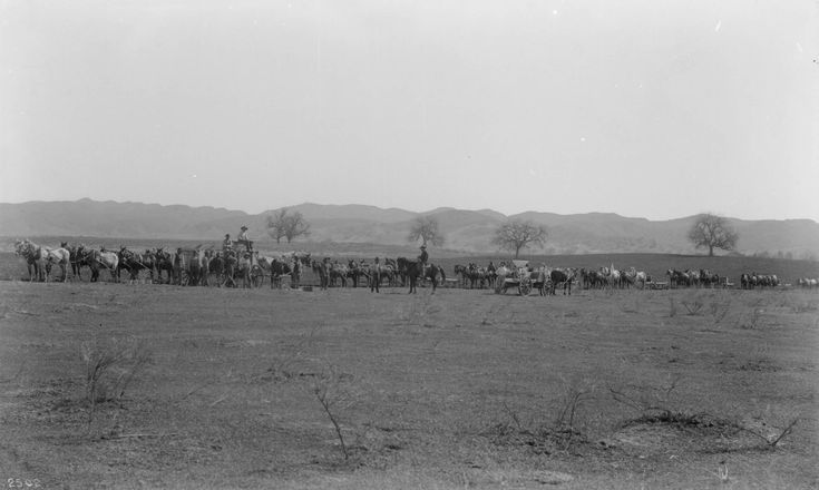 Photograph of a long row of horse-drawn wagons and men on horseback plowing and seeding 5,000 acres of wheat on the southeasterly portion of the Lankershim Ranch in the San Fernando Valley.