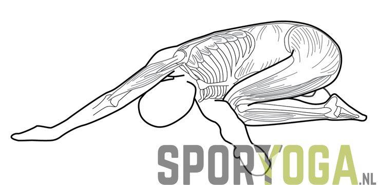 shoulder back stretch anatomy yoga from sportyoga.nl