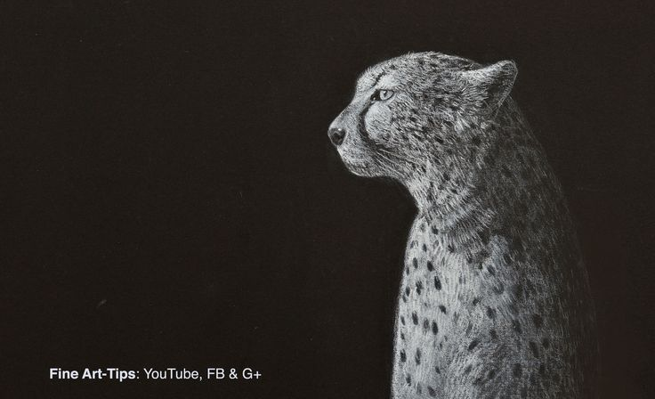 How to Draw a Cheetah - Narrated #art #drawing #Finearttips #cheetah #animals #tutorial #artistleonardo #LeonardoPereznieto  Take a look to my book here: http://www.artistleonardo.com/#!ebooks-english/cswd