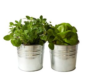 Add life with living herbs in simple pots