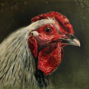 Wyandotte, kippenschilderij  Schilderijen - Nanouk Weijnen | Beeldend kunstenares