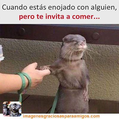 Cuando estas enojado ...   Mas imágenes aquí  imagenesgraciosasparaamigos.com  #imagenesgraciosasparaamigos #imagenesgraciosas #memes #comida