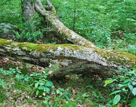 Árbol con una parte del tronco cosido