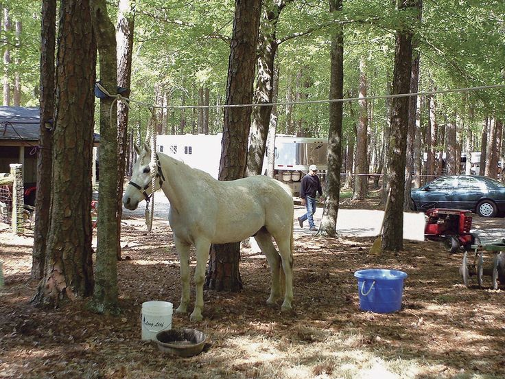 51 best images about Horse camp ideas on Pinterest | Pie ...