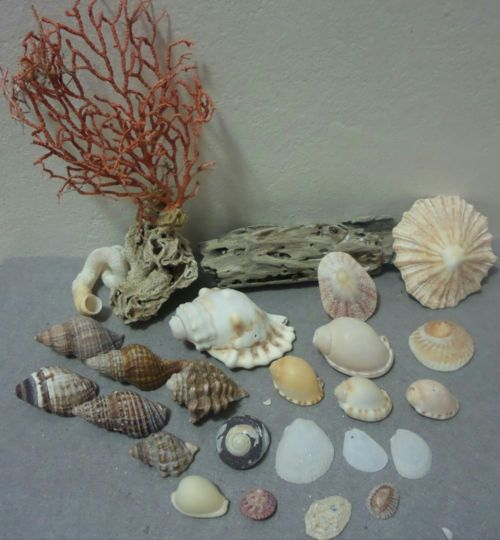 Buy Sea Shells & rare red grass from Jeffreys Bay (cleaned handpicked) for R39.50