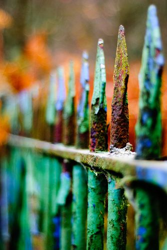 The colours on this fence are beautiful... you could almost touch the rust!