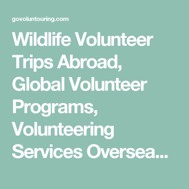Wildlife Volunteer Trips Abroad, Global Volunteer Programs, Volunteering Services Overseas - GoVoluntouring