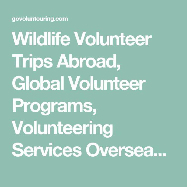 Wildlife Volunteer Trips Abroad, Global Volunteer Programs, Volunteering Services Overseas - GoVoluntouring