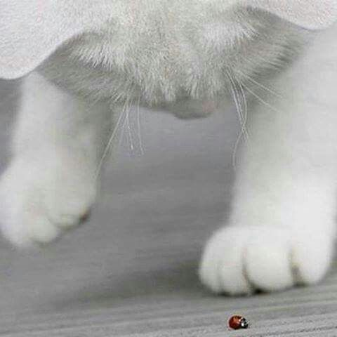 The kitty with the beetle