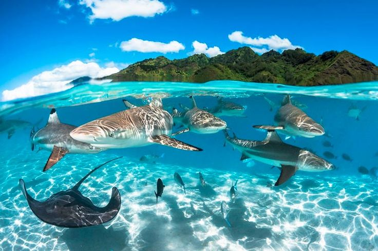 Les photos gagnantes du UK Underwater Photographer of the Year 2016