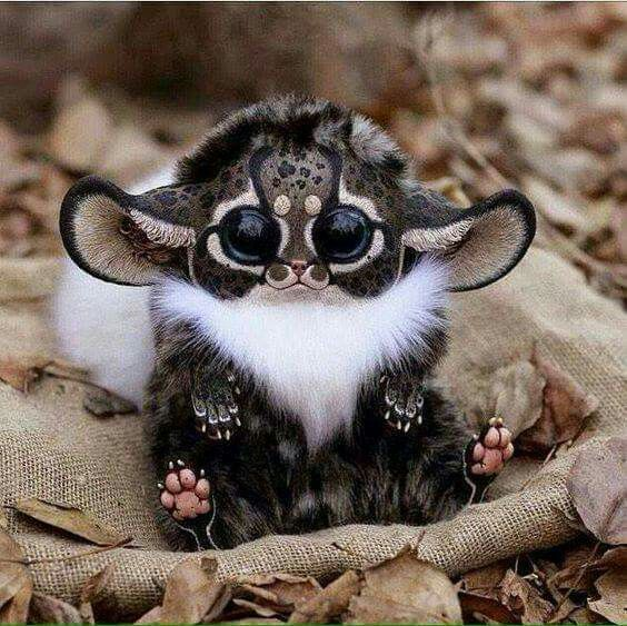 Madagascar southeastern Africa Monkey... its a real live furby!!